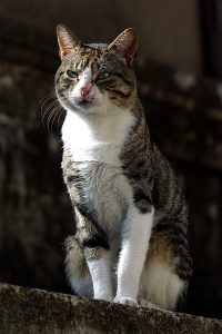 Katze, Dubrovnik, Krotien