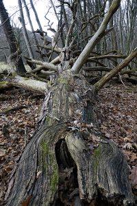 Naturpark DIE WÜSTE Mannersdorf