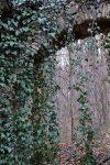 Torbogen Klostermauer, Naturpark DIE WÜSTE Mannersdorf